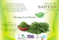 Best Quality Moringa Oleifera