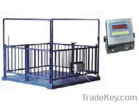 Sell Livestock scales, animal scale, floor scale from YingHeng Scale