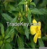Damiana leaves  for sale