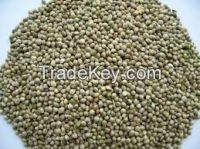 Hemp seeds for sale