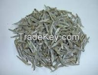 Frozen and dried Anchovy for sale