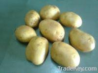 Selling fresh potato