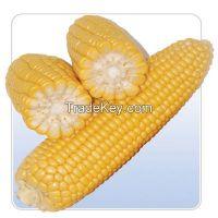 Sell maize