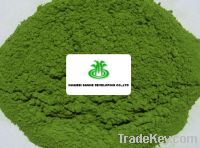Sell Dehydrated Spinach Powder