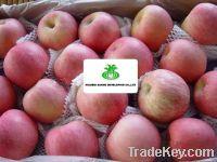Sell Apple Fuji
