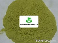 Sell Dehydrated Spinach Powder B grade