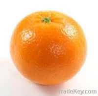 Sell Offer Of Mandarins/Kinnow
