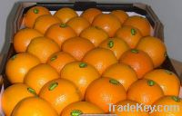 Sell  fresh Valencia oranges, Navel oranges and other fruits