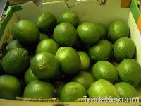 Sell fresh green lemons yellow lemons water melons and othefruits