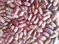 Green Mung Beans, Vigna Beans