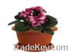 Used Plastic Violet Flower Pots