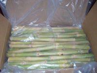 Fresh Raw Sugarcane