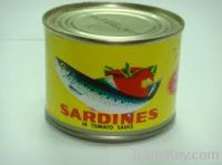 Sell Canned Sardine in Tomato Sauce