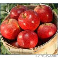 Sell Fuji Apples