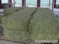 Sell Feed grade Alfalfa Hay