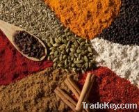 INDIAN SPICES - GROUP