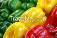 Color Capsicum