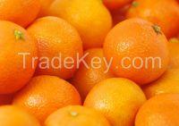 Honey Mandarin Orange Citrus Fruit