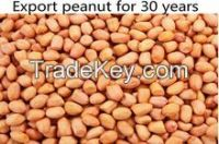 peanut kernel shell export of agriculture products