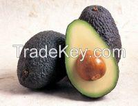 Quality Fresh Avocado ( Hass ) !!