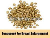 bulk fresh Fenugreek