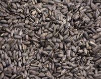Sunflower Seeds / Sunflower Seed Hulled / Sunflower Kernels