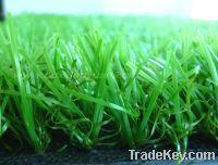 Sell best lawn grass