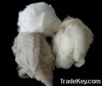 Sell cashmere fibre