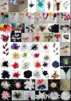 Sell feather flowers