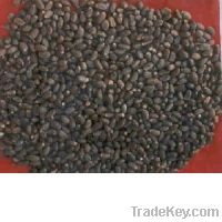 Sell Palm Kernel Seed