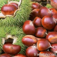 Sell chestnut