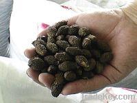 Sell Malva Nuts
