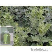 Sell Artemisia Oil