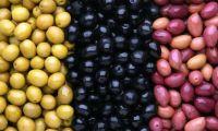 Fresh Dates Seeds  Olives