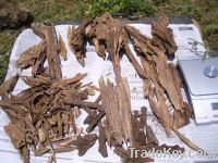 Sell agarwood super grade TK