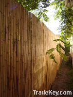 Sell Bamboo Fences