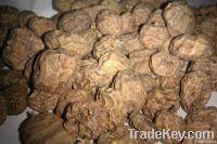 TIGER NUTS (MINI , STANDARD & JUMBO)