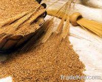 Sell  Wheat Bran