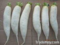 Sell Fresh Radish