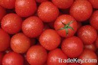 Sell Fresh Tomatoes