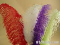 Sell Ostrich feathers
