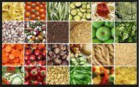 sunflower seeds, sorghum seed, pumkin seed, cumin seed, yopo seed, caraway seed, dill seed