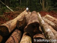 Sell TIMBER LOGS
