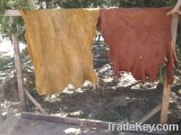 Raw Animal Hides (Skins) For Sale