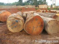 Mahogany Logs and Sawn Timber for Sale