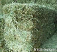 Sell High Quality Alfalfa Hay For Sale