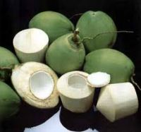 young coconuts