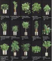 foliiage plant