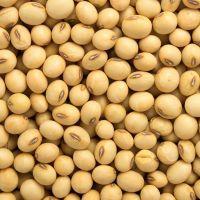 Organic Soybeans Non GMO