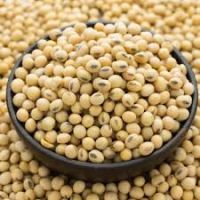 Sweet quality soya bean for oil , soybean , Soybean Seeds